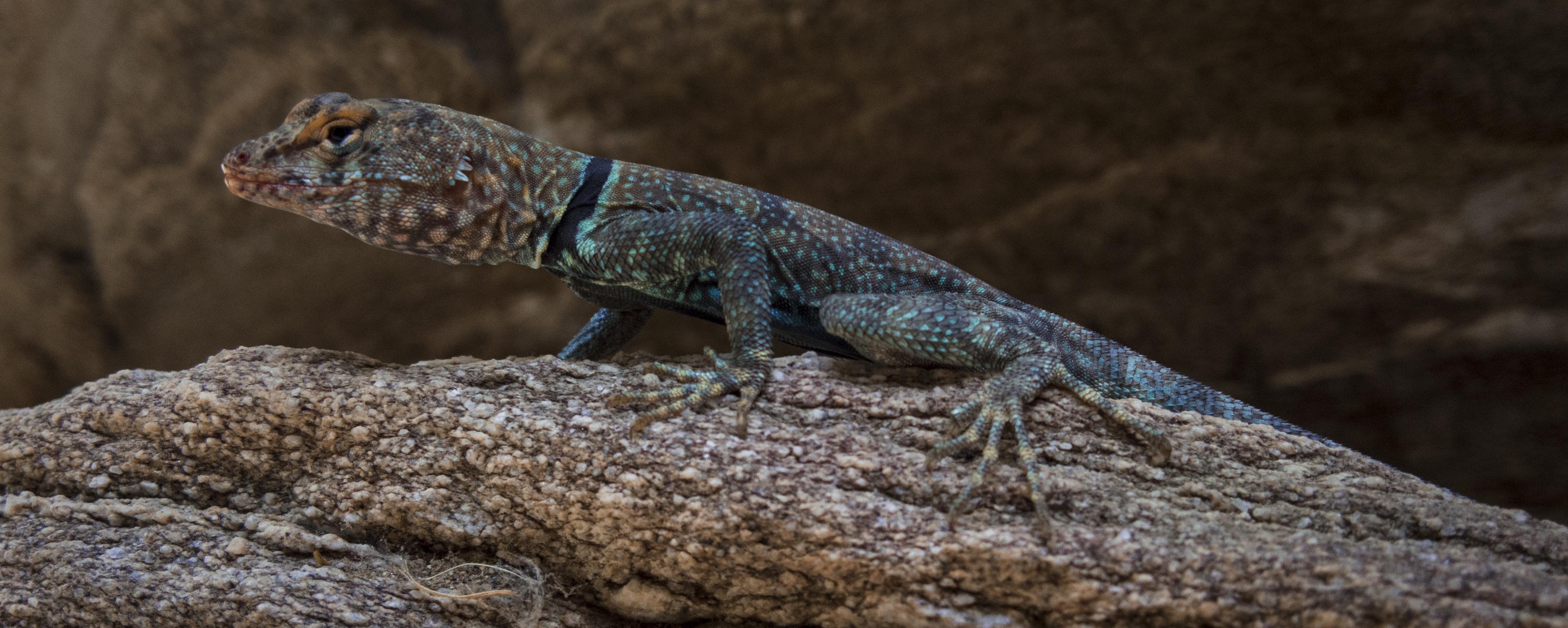 Lizard by luzudemcas