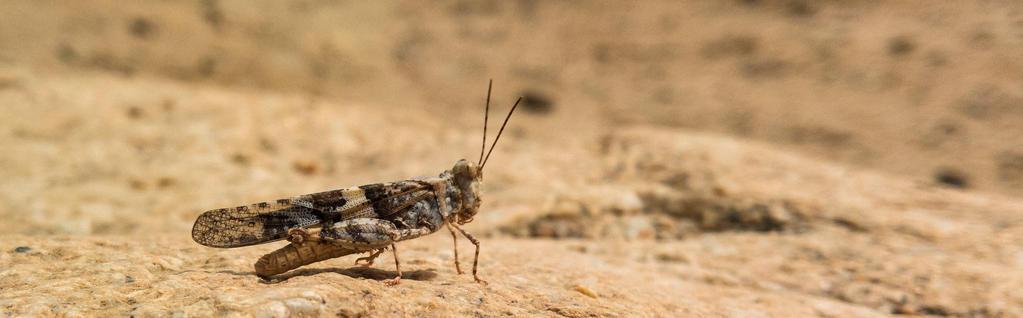 Grasshopper by luzudemcas