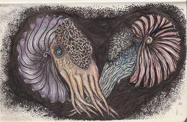 Ammonite Sketch Nr.3