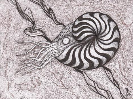 Variations on Ammonites #1