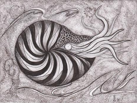 Variations on Ammonites #2