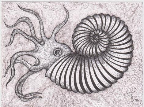 Variations on Ammonites #3