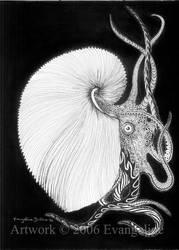 Argonauta by squidink
