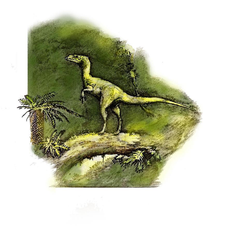 Hesperonychus | www.imgkid.com - The Image Kid Has It!