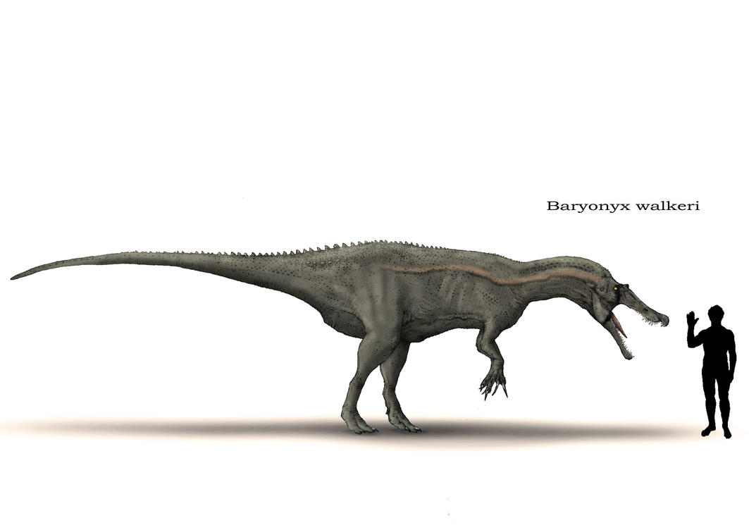 Baryonyx By Hyrotrioskjan On Deviantart