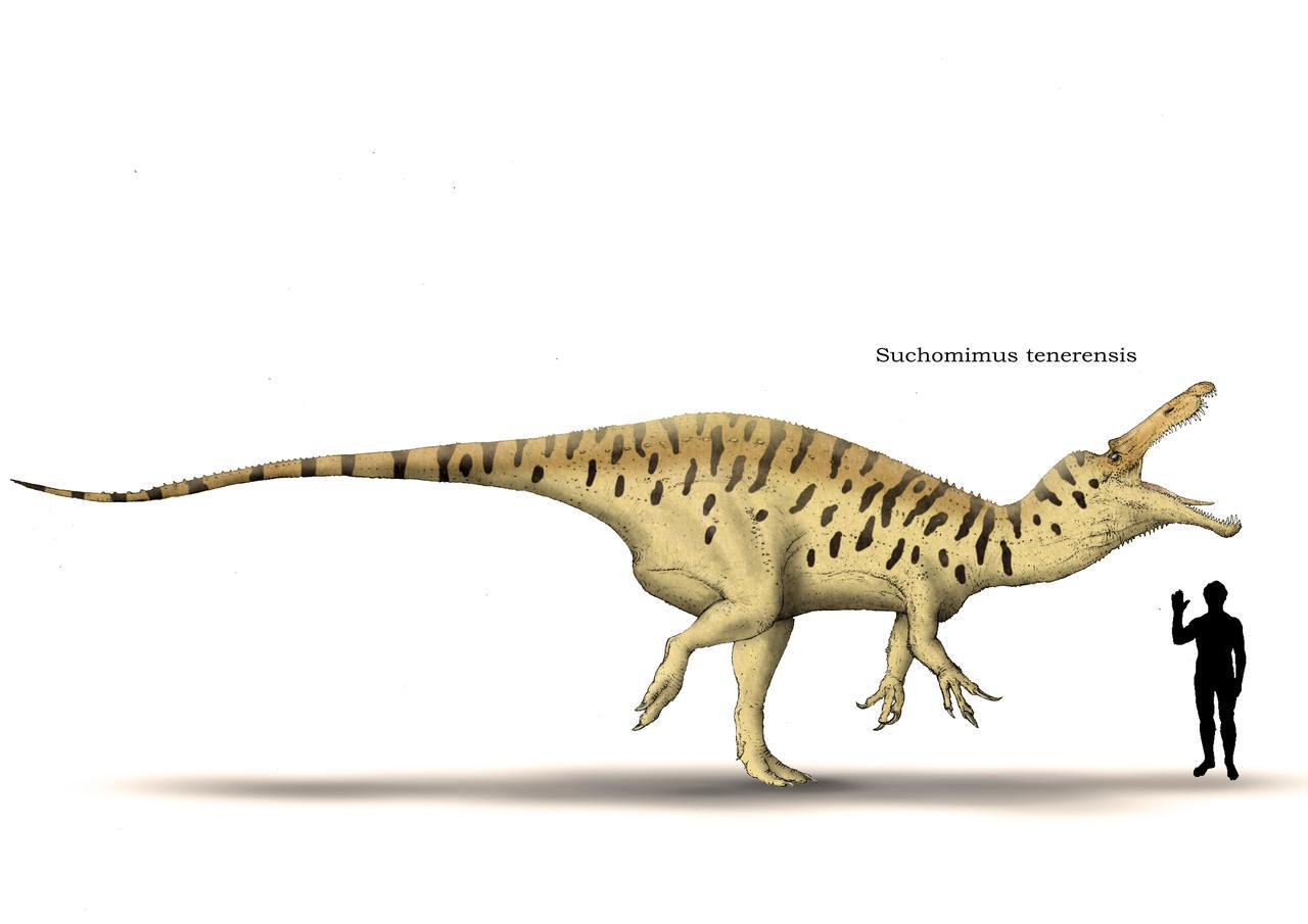 Suchomimus by Hyrotrioskjan