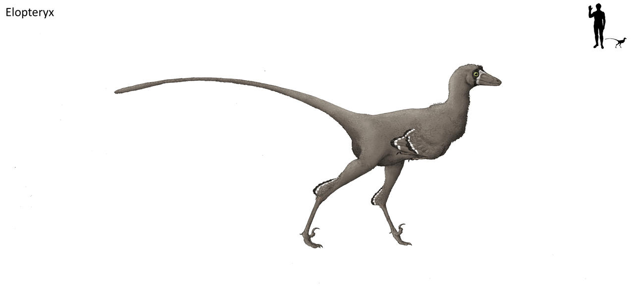 Elopteryx by Hyrotrioskjan