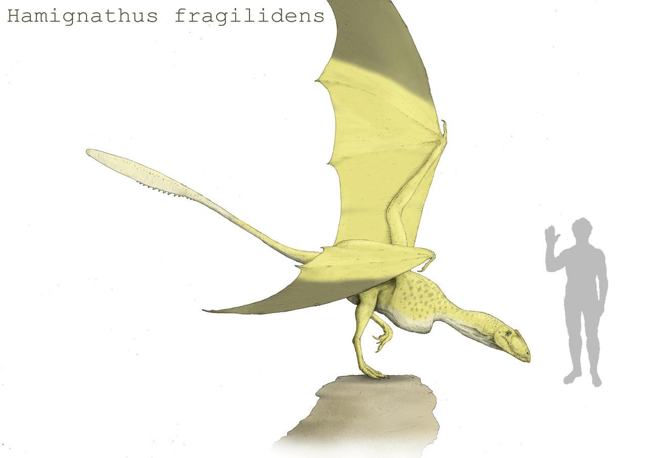 Hamignathus by Hyrotrioskjan