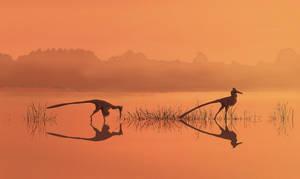 Buitreraptor lake