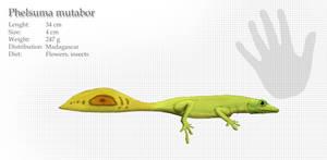 Shapeshifting day gecko
