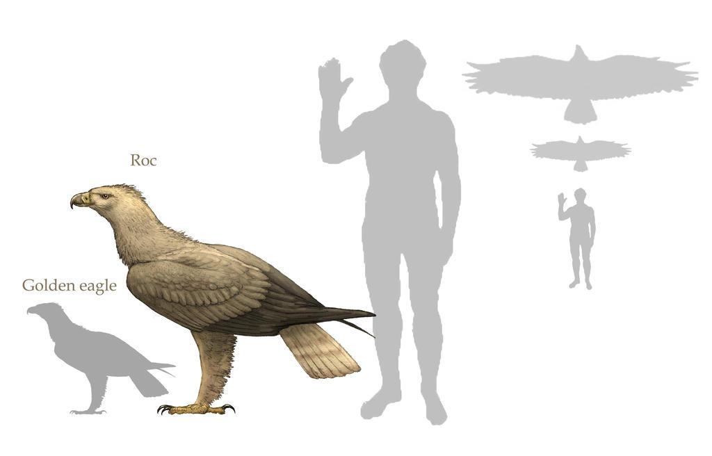 Grey Wolf v Haast's Eagle