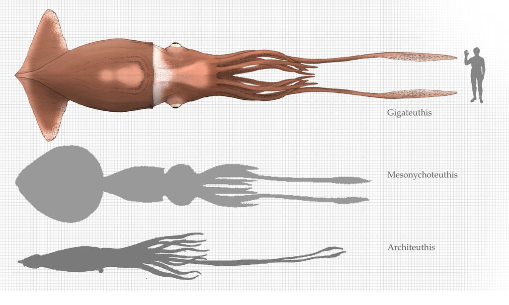 Monster squid size chart by Hyrotrioskjan on DeviantArt