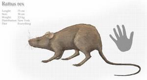 New York giant rat