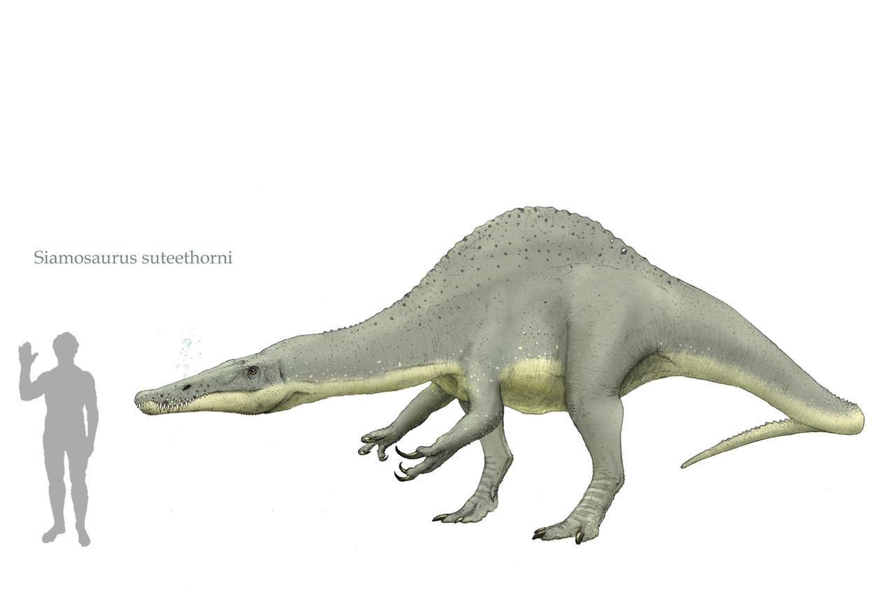 Siamosaurus by Hyrotrioskjan