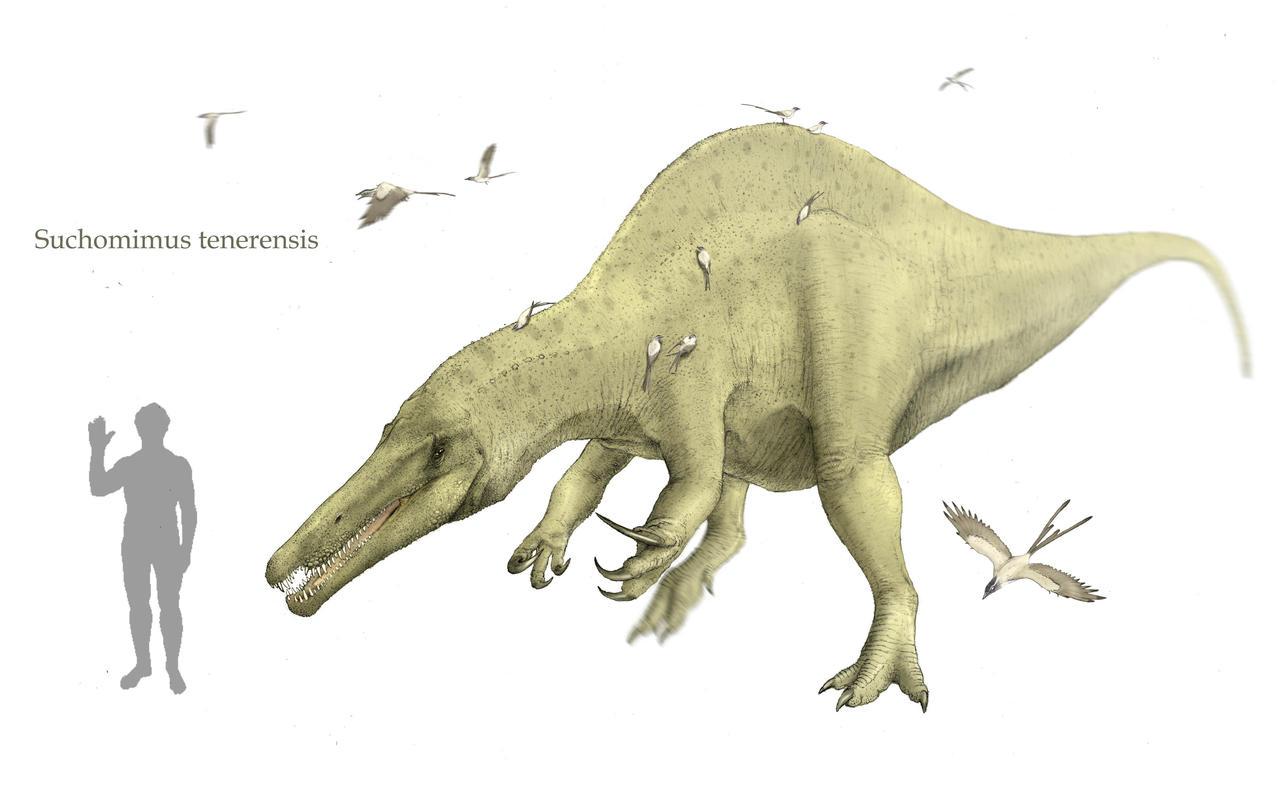 Suchomimus