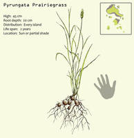 Pyrungata Prairiegrass by Hyrotrioskjan