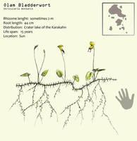 Olam Bladderwort by Hyrotrioskjan