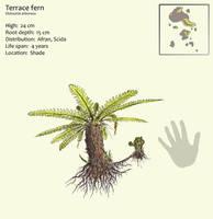 Terrace fern by Hyrotrioskjan