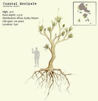 Coastal woolpalm by Hyrotrioskjan
