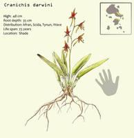 Cranichis darwini by Hyrotrioskjan