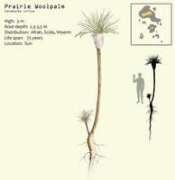 Prairie Woolpalm by Hyrotrioskjan