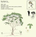 Bushberry