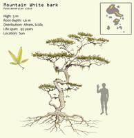 Mountain white bark by Hyrotrioskjan
