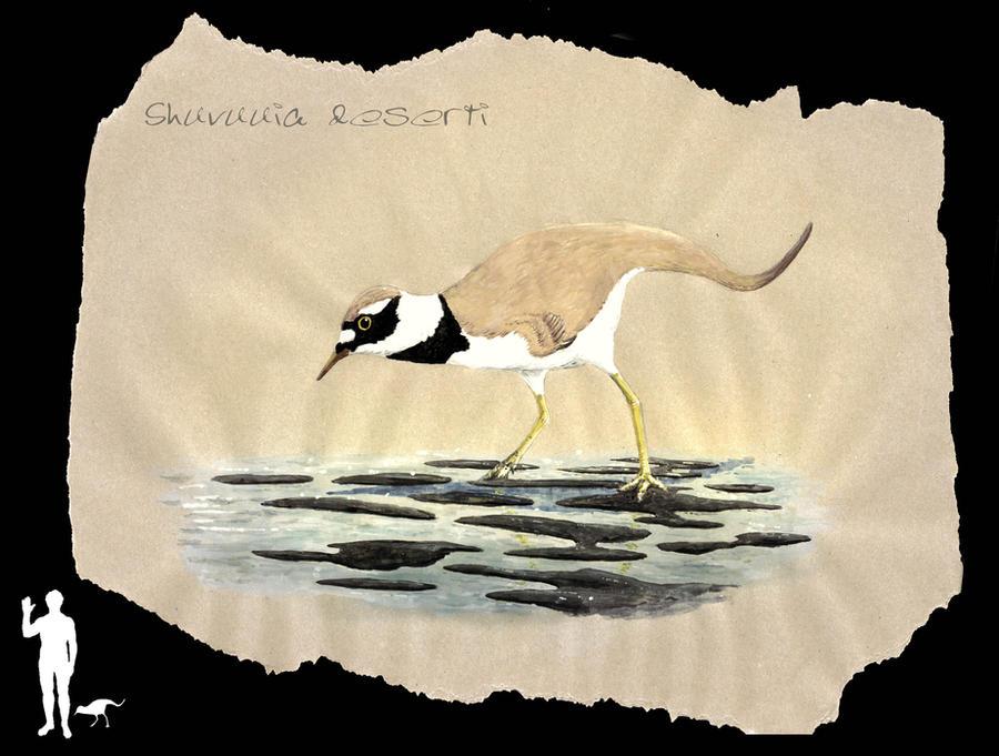 Desert bird gets wet
