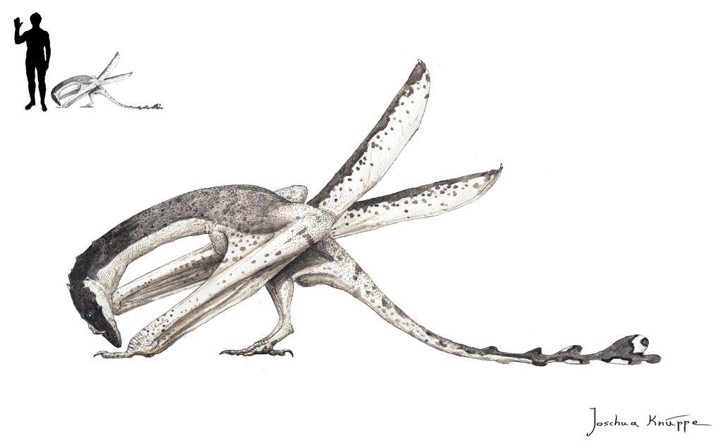 Megaceloxus atlanticus