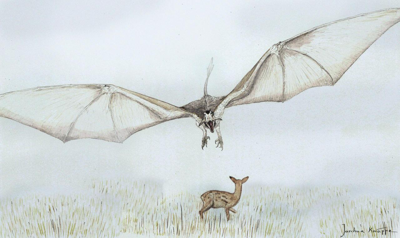 Gelupterus orientalis by Hyrotrioskjan