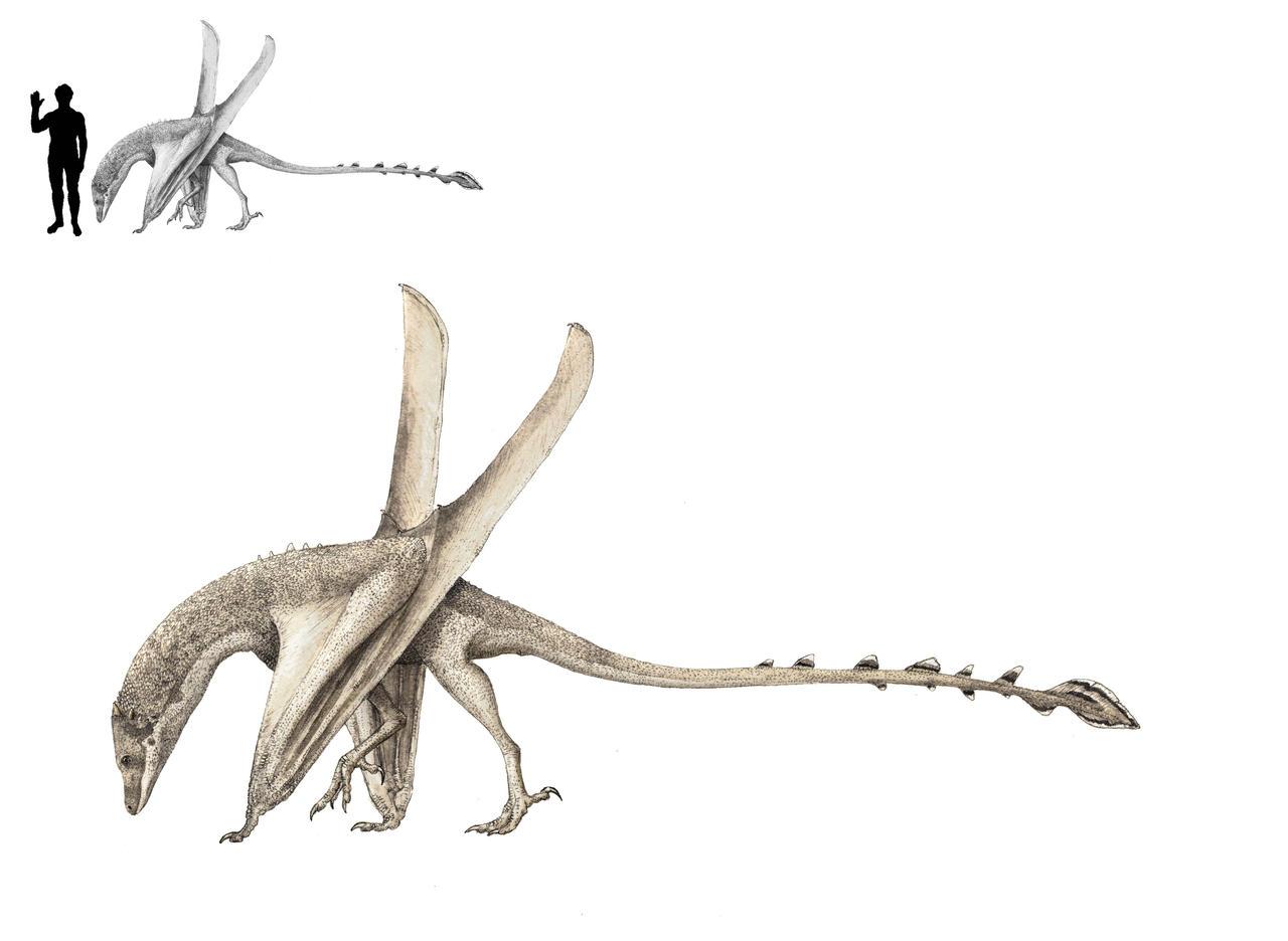 Dsangisaurus robustus by Hyrotrioskjan