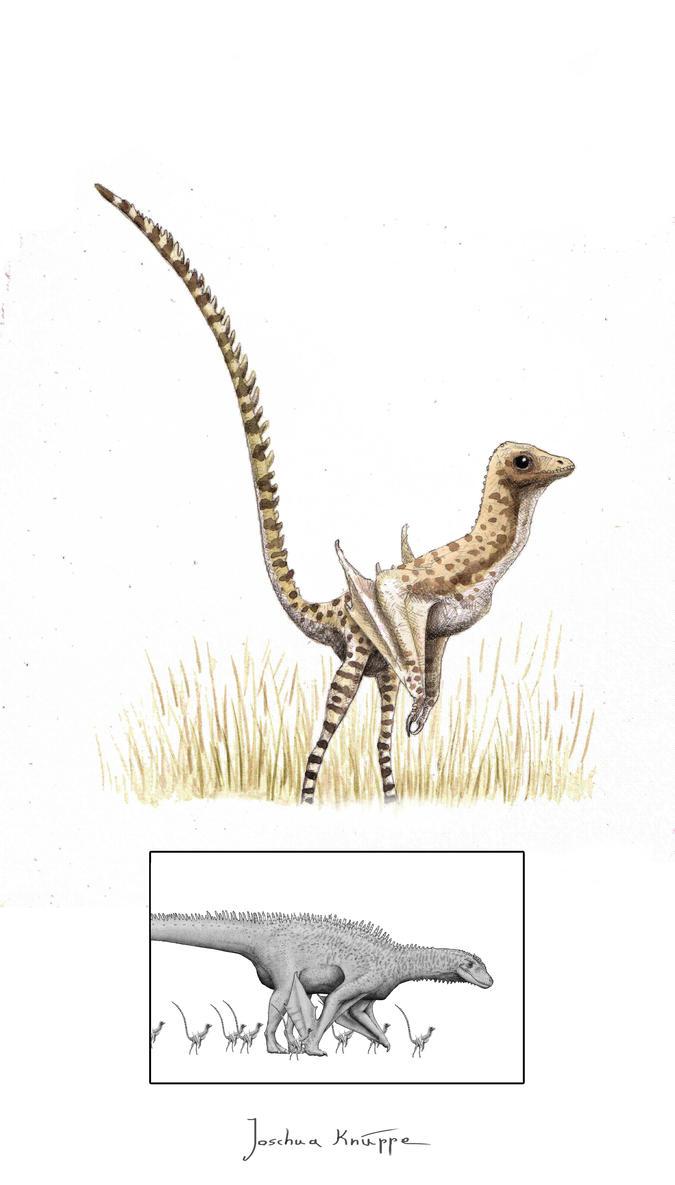 Juvenile Spinolurus by Hyrotrioskjan