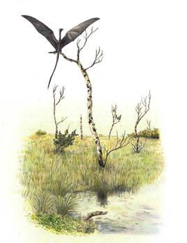 Umbragrus swamp