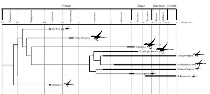 Lophoraptoridea history