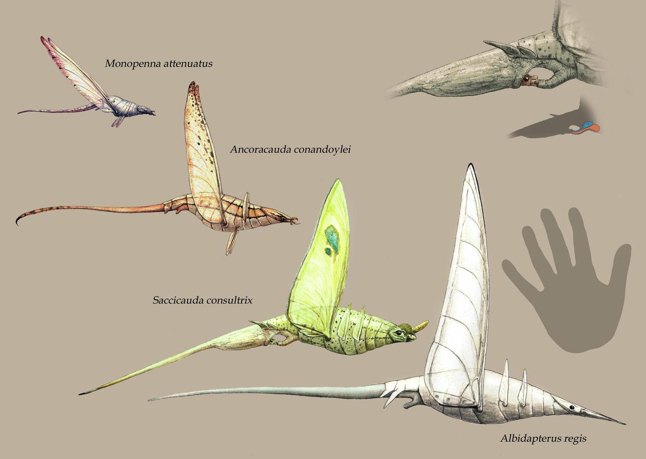 Saccicauda and Albidapterus by Hyrotrioskjan