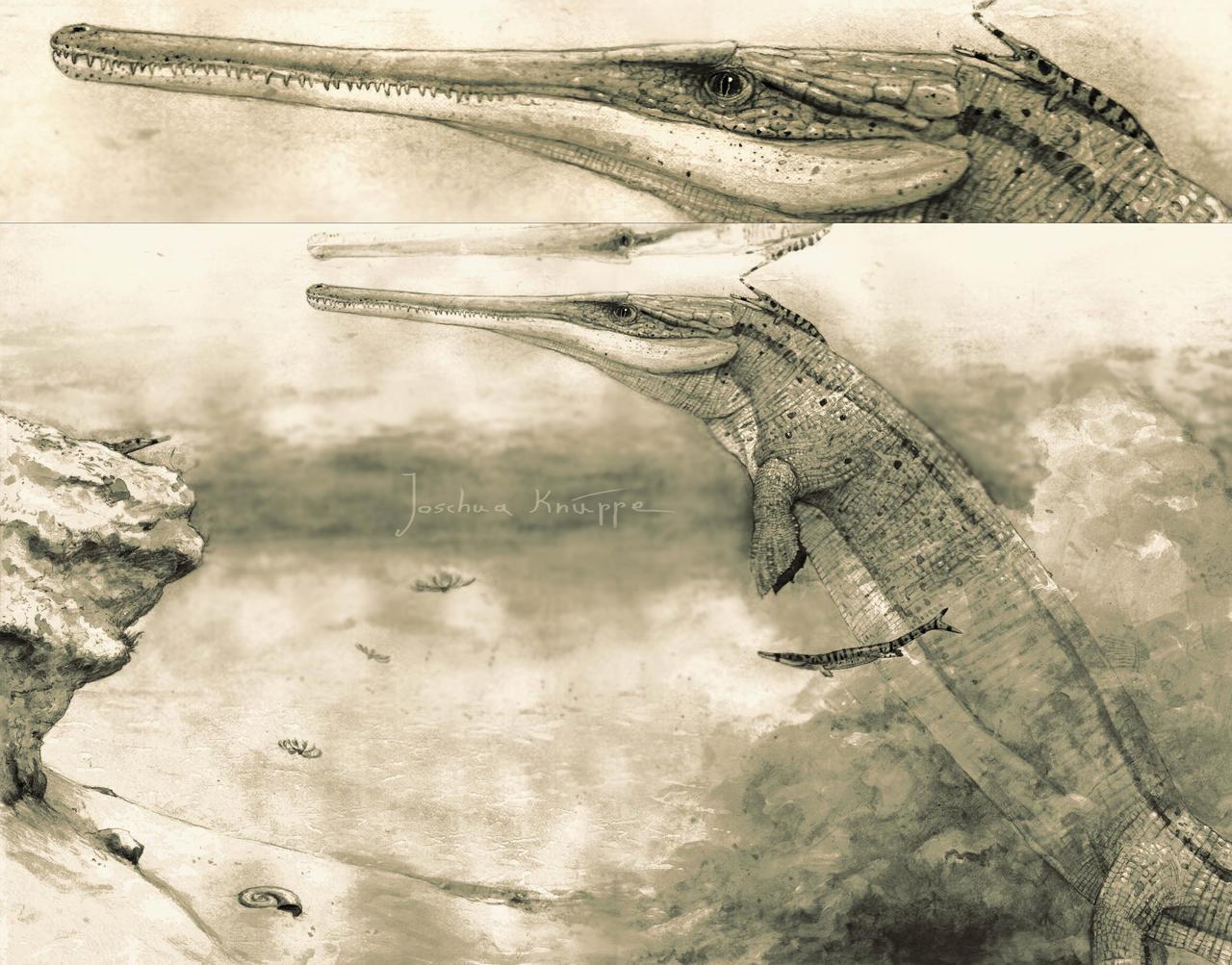 Cricosaurus