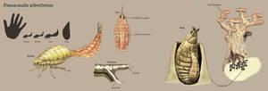 Pansacauda arborfretus