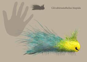 G. hispida by Hyrotrioskjan