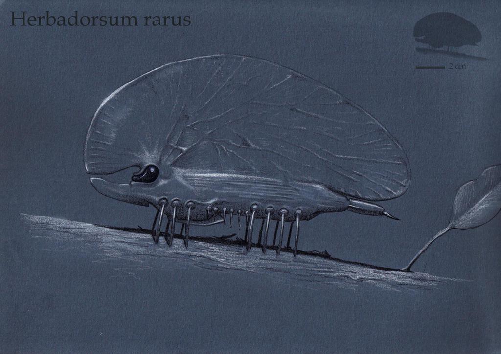 Herbadorsum by Hyrotrioskjan