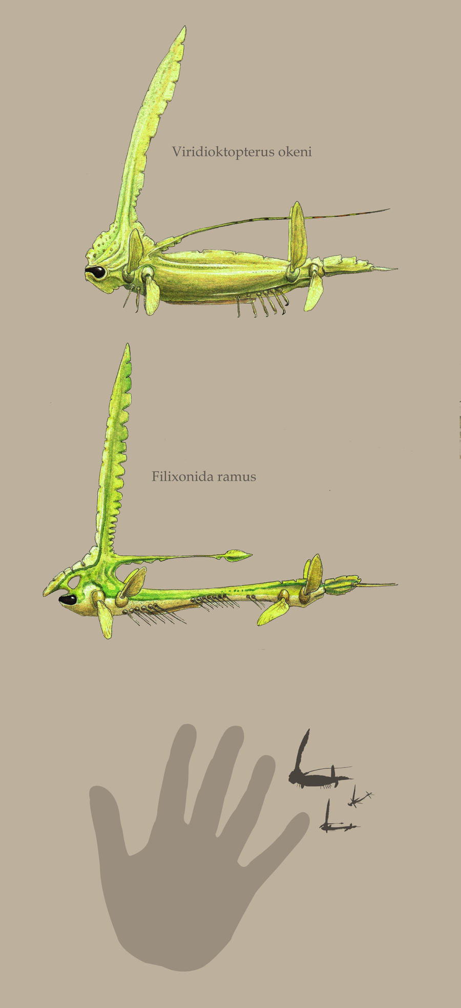 Viridioctopterus and Filixonida by Hyrotrioskjan