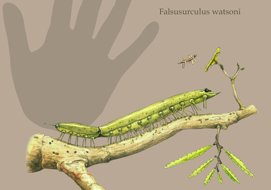 Falsusurculus by Hyrotrioskjan