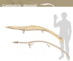 Cavinatrix dzonoti by Hyrotrioskjan