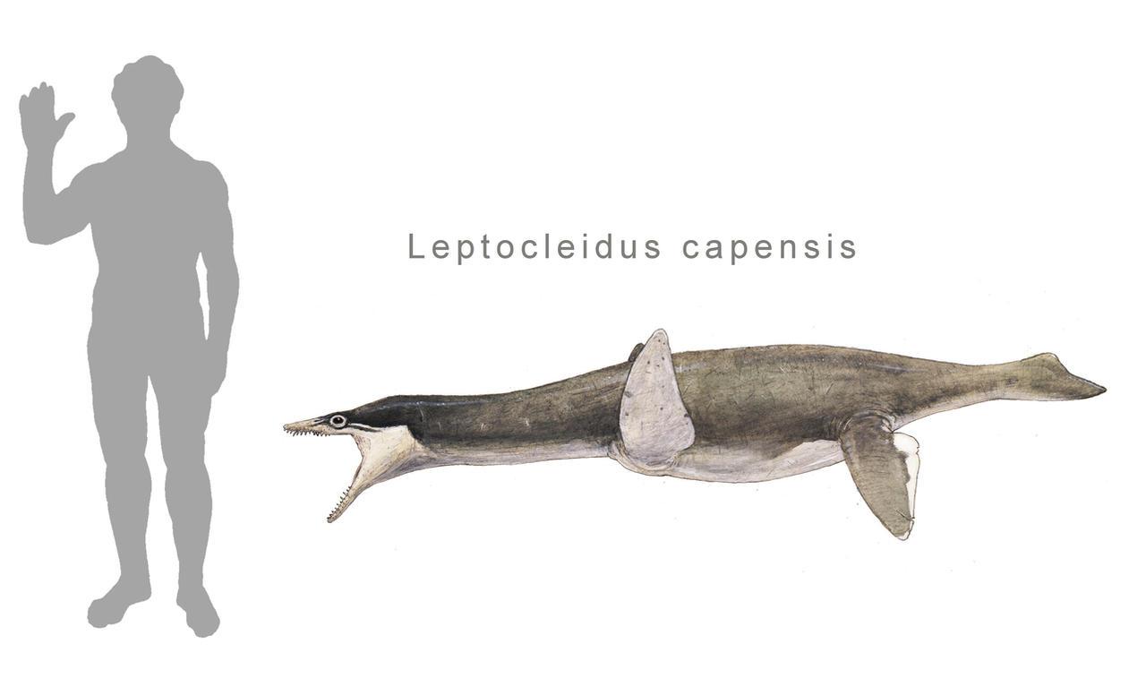 Leptocleidus capensis by Hyrotrioskjan