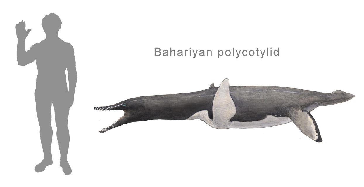Stromers polycotylid by Hyrotrioskjan