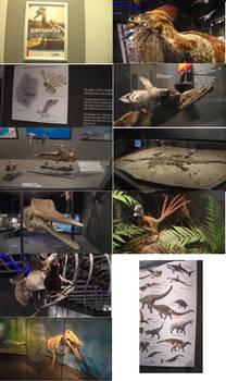 New prehistoric exhibition