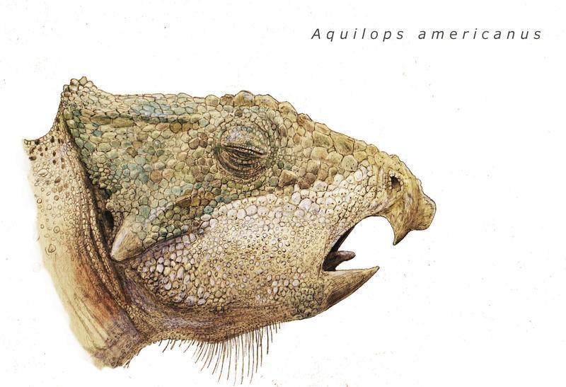 Aquilops by Hyrotrioskjan