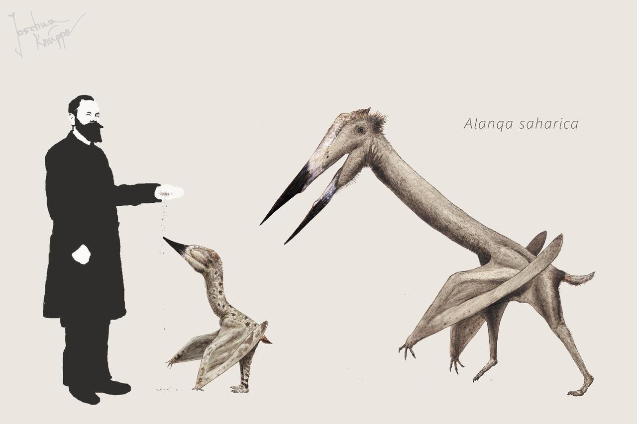 Alanqa by Hyrotrioskjan