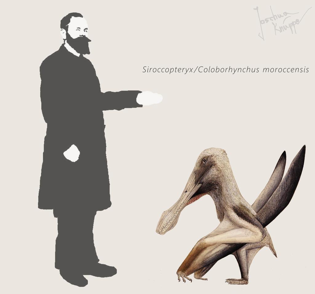 Siroccopteryx/Coloborhynchus
