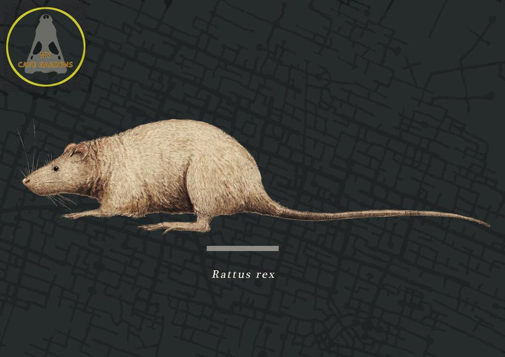 The King of rats by Hyrotrioskjan