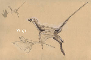 Yi qi by Hyrotrioskjan